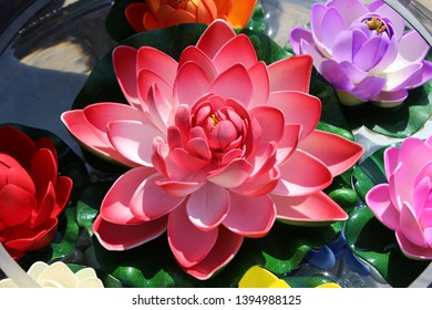 Water Lily Flower, its a religious symbol in the Hindu and Buddhist traditions. its a symbol of purity, spontaneous generation and divine birth. its available in many colors like white, red, pink, etc