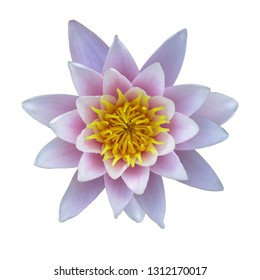 Water lily flower white isolated background. Nature for design.