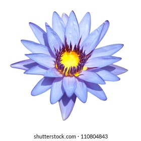 Water lily isolate in the white background