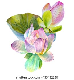 Water Lily or lotus flower with leaf. Hand drawn, watercolor, isolated on white background.