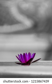 Water lily in old buddhist temple in Thailand