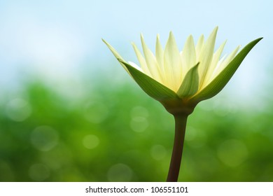 Water lily on spring background