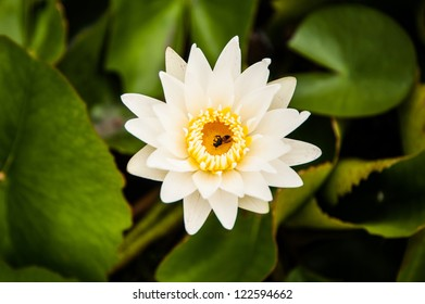 water lily in swamp
