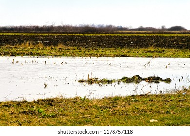 Water in the middle of flooded agriculture crops