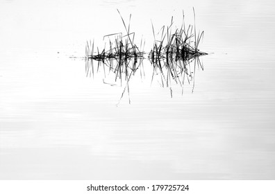 Water mirror and reed with reflection in black and white