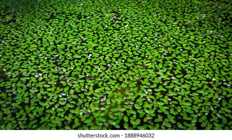 Water moss that filled the swamp