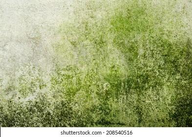 Water moss wall