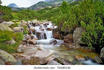 The water of a mountain river with rocks and dwarf-pine near the waterfall Skok in the High Tatras. Mountain river, rocks, wild flowers and dwarf-pine scenery. A long time.