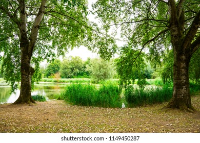 water in National Park Biesbosch, Merwelanden, Dordrecht, The Netherlands