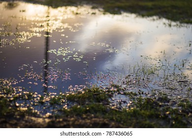 Water on the grass