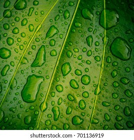 water on leaf background / leave texture