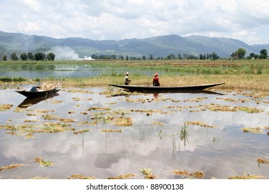 Water on the rice field on the Inle lake, Myanmar