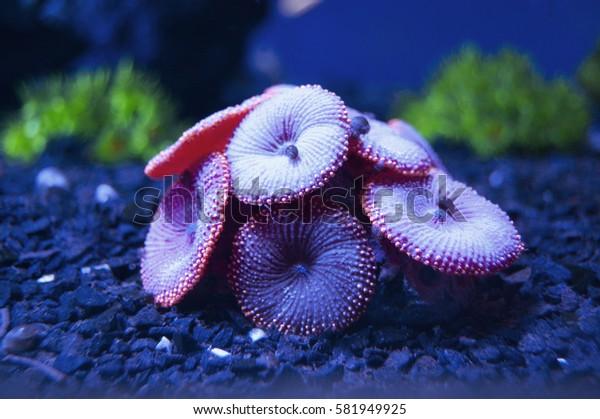 Water plant. Aquarium, marine world. Sea, ocean