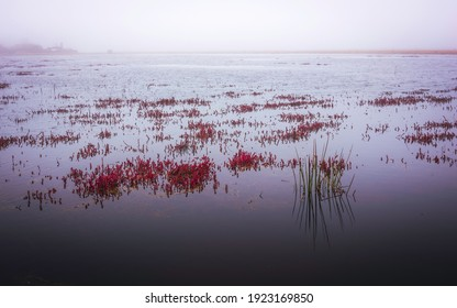 Water Plants in the Flooded Cranberry Bog on a Foggy Day