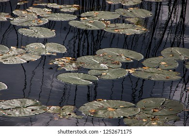 Water plants in a lake