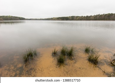 Water plants in a lake.  St. Mary's River State Park, Leonardtown, MD, USA.