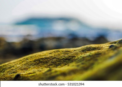 Water plants on the rock close up, nature abstract blurred background. Phuket island, Thailand