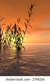 Water plants at sunset -  3D scene.