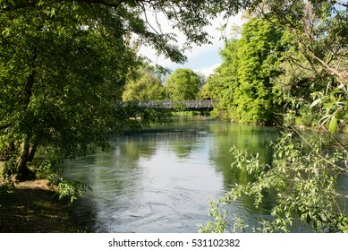 Water plants, swamps, ponds and rivers