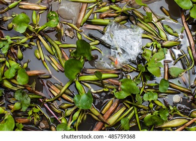 water pollution environmental