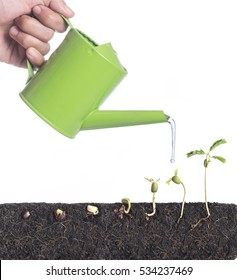 Water pouring from watering can, Growing plants with underground root visible isolated white background