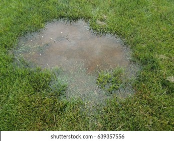 water puddle in green lawn