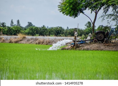 Water Pump - Powerful Water Flowing from a Large Pipe Pump in Rice Field at Countryside in Center of Thailand, The way of farming of Thai farmers, Green seedlings in rice fields, Thai farmers.