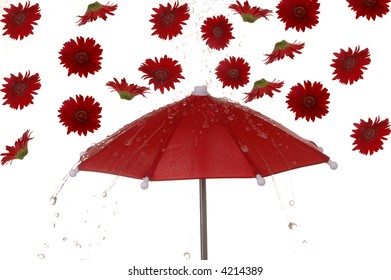 Water and red gerbera flowers rain down on a bright red umbrella.