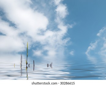 Water reed plant in water against blue cloudy sky