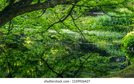 Water reflection of a forest scene in mid summer