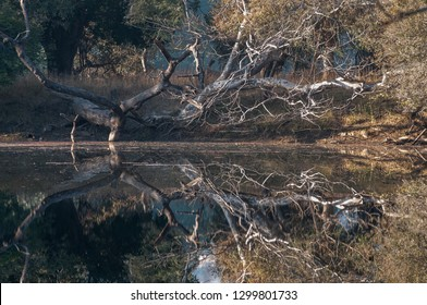 Water reflection in Ranthambore National Park in Rajasthan, India