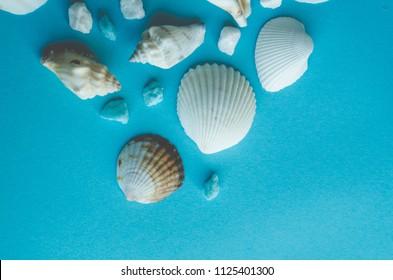 water shell art background