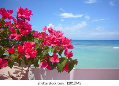 Water, sky & flowers.