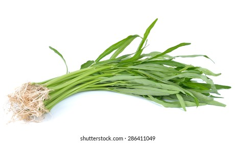 Water spinach , Morning Glory  on white background
