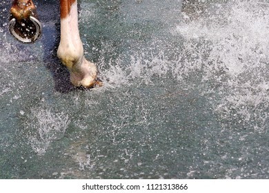 Water splashes on the ground near to horses hooves after cooling off following race at Nottingham Races : Colwick Park, Nottingham, UK : 10 June 2018