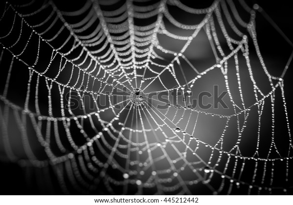 Water spot on the spider net