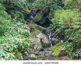 water spring cascade with moss and stones and lush green vegetation in the rainforest jungle at the end of the hiking trail in Faial da Terra, Sao Miguel island in Azores, Portugal