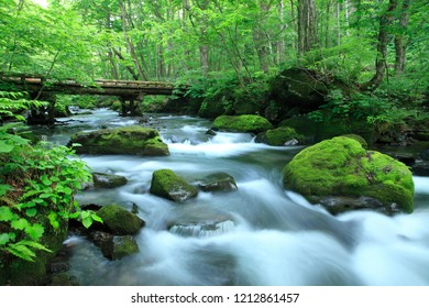 water spring in forest / Aomori,Japan