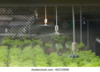 water springer at organic vegetable farm , Hydroponics vegetable ,