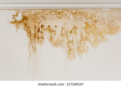 Water stain on the interior wall of an old house.