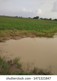 Water storage in the field after heavy raining in Kanpur , Uttar Pradesh , India Dated 30 July 2019 .