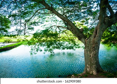 water stream and beautiful hangings from a tree