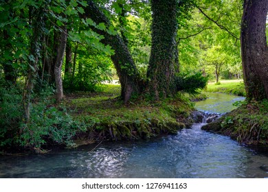 Water stream in the sunny forest. Nature in Slovenia
