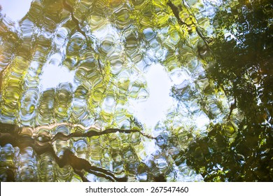 Water surface with reflection of the green trees.