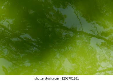 the water surface with the reflection of tree branches on it