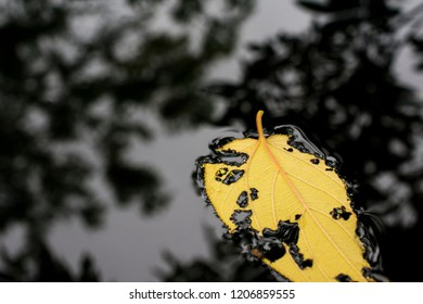 water surface with yellow leaf floating on it