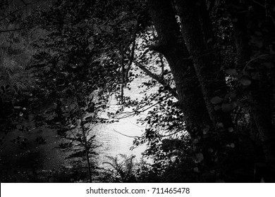 Water Through the Dark Trees in Monochrome