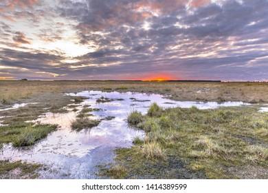 Water in Tidal Marshland nature reserve Verdronken land van Saeftinghe in Province of Zeeland. Netherlands