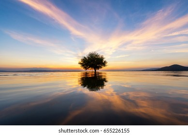 Water and tree sunset in sea