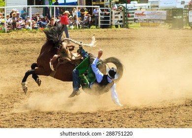 WATER VALLEY, CANADA - JUN 6 2015:Unidentified Cowboy participating in the Calf Roping at the Water Valley Rodeo. This annual event is important for the rural as well as the sport loving community.
